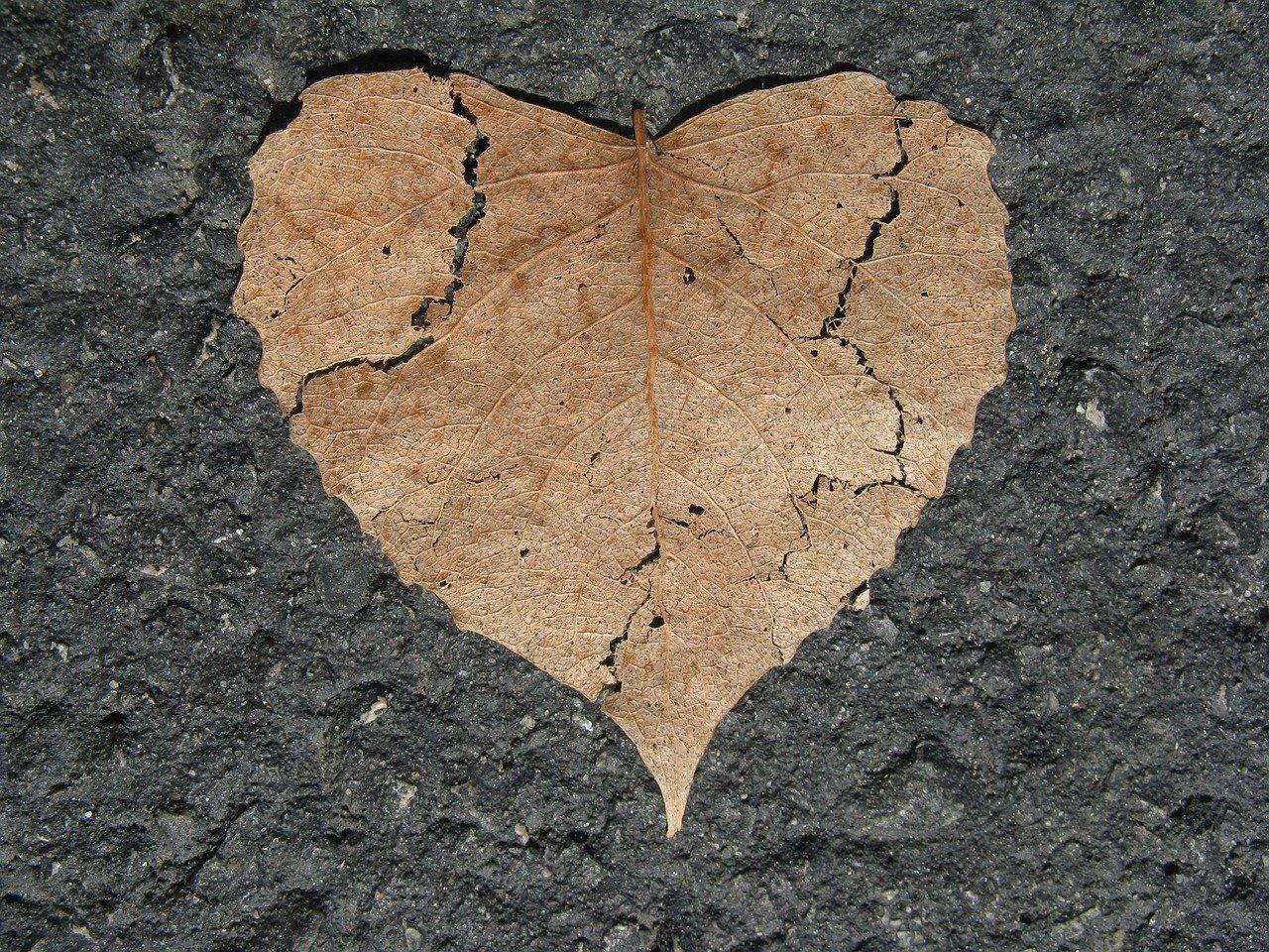 A broken heart leaf