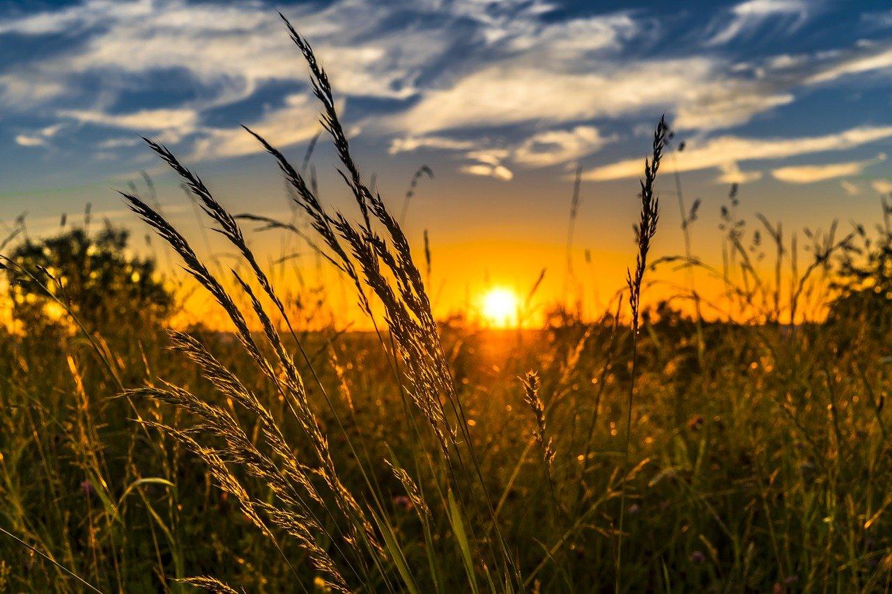 Meadow sunrise sunset